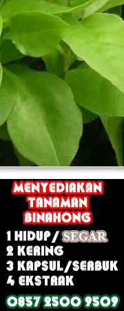 obat herbal binahong