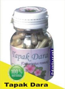 Herbal Tapak Dara