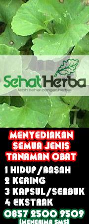 penjual tanaman obat distributor dan produsen tanaman langka