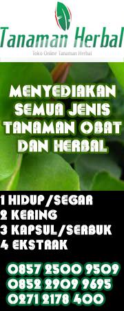 toko online tanaman herbal alami